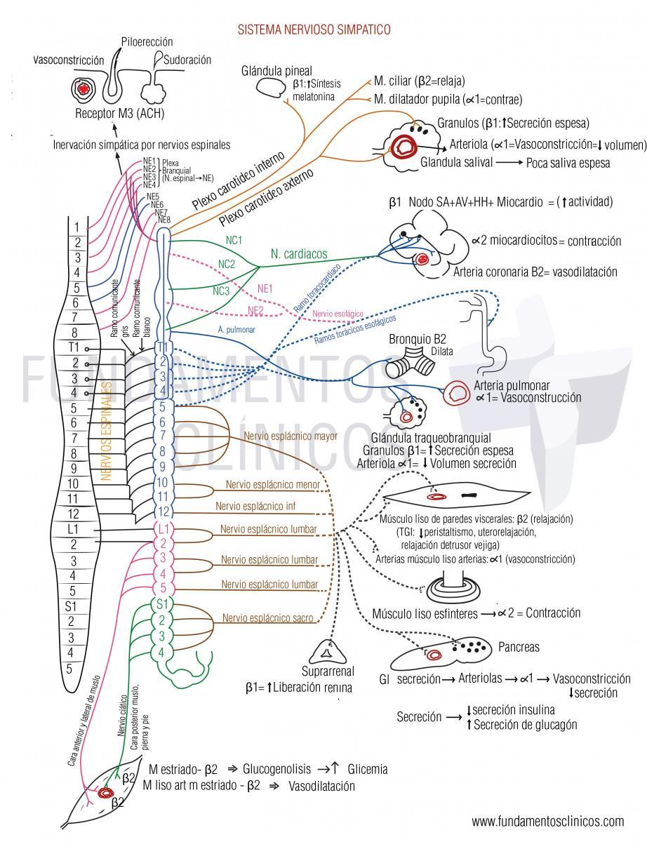 La disfunción sexual es un efecto secundario del bloqueador beta-adrenérgico